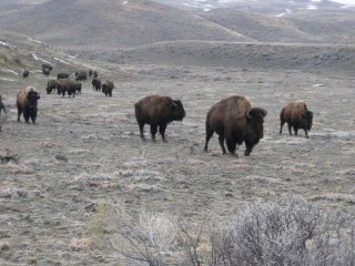 Yellowstone Car Rental Drop At Different Airport
