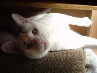 Benito, un gato muy sexy...