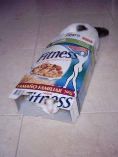 Gato en caja de cereales
