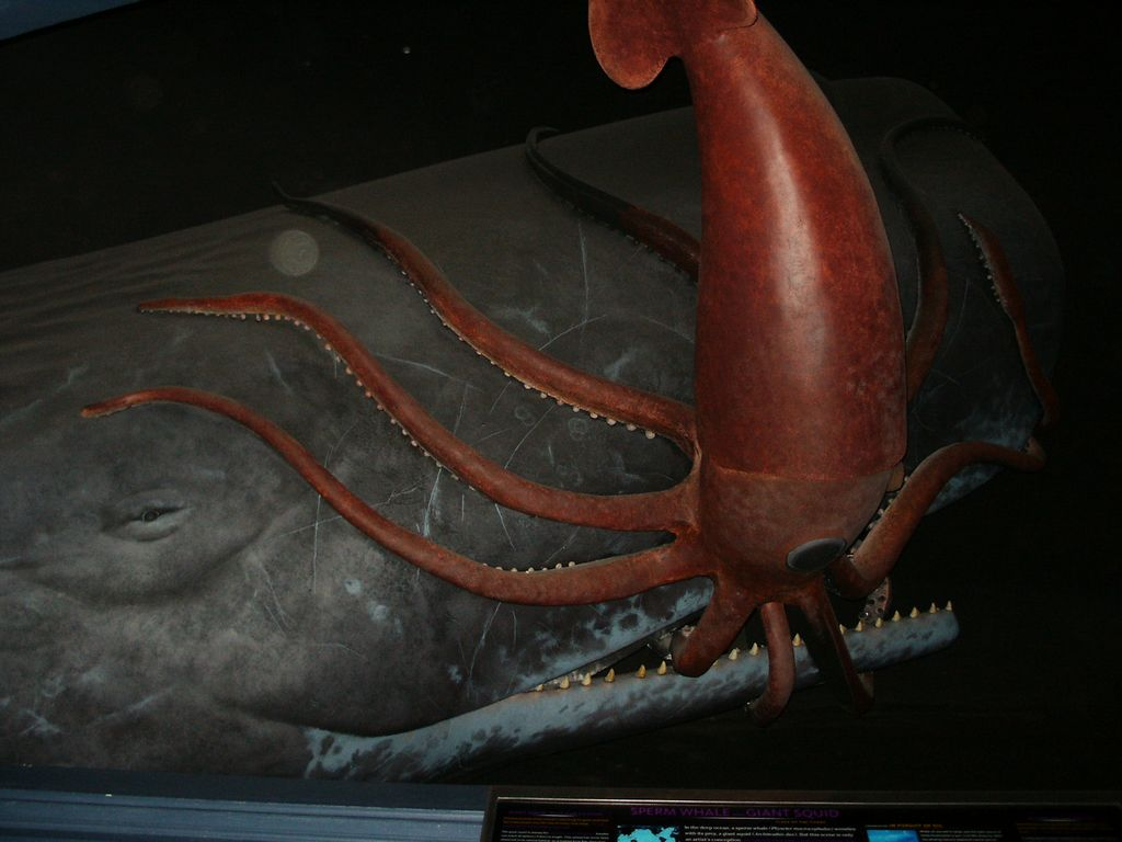 Museum Of Natural History Giant Squid Enw York