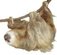 나무늘보 / laiskiainen / sloth