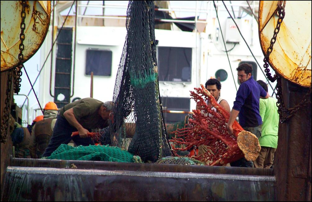 moratorium on bottom trawling