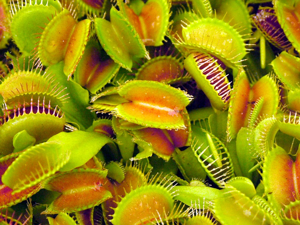 What Do Venus Flower Baskets Eat : Natures mighty pictures nature photos wallpapers