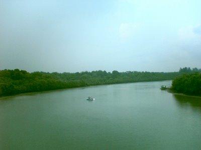 Punggol River view along Tampines Expressway