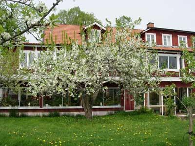 Klefstad restaurang med plommonblommande träd