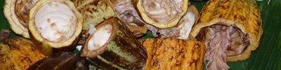 Är inte kakaobönorna vackra?