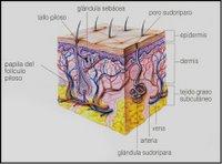 Corte de piel (ampliar)
