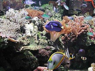 Ecosistema en un acuario