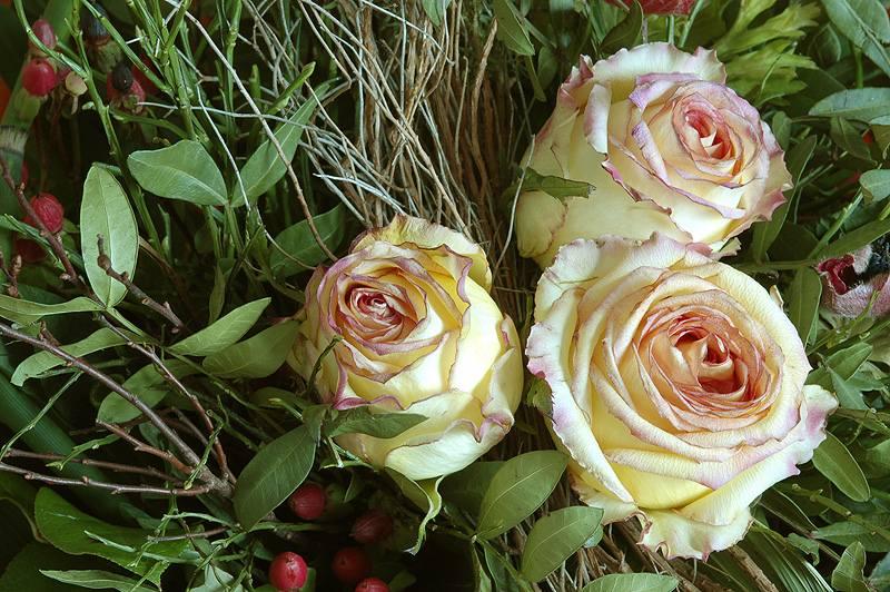 http://photos1.blogger.com/blogger/2781/605/1600/roses.jpg
