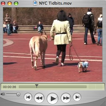 NYC Tidbits
