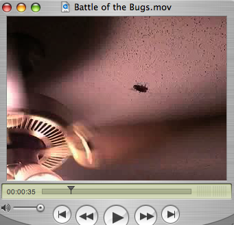 Battle of the Bugs