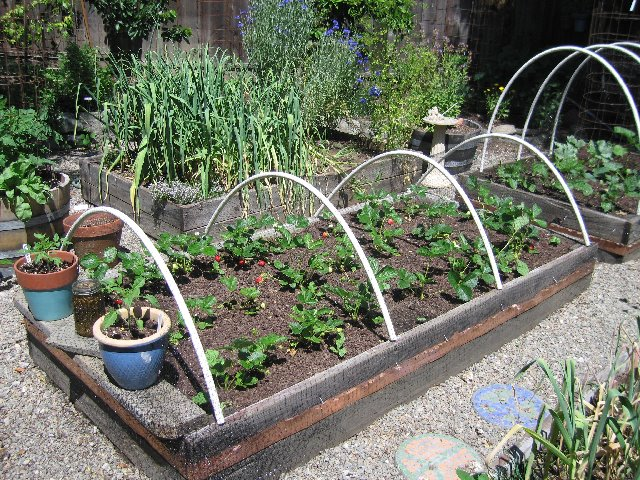 Uncle Tom\'s Garden: PVC Bed Hoops