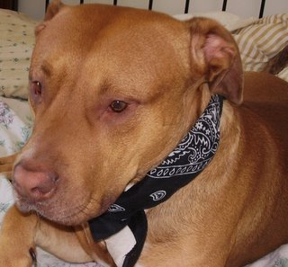 Image Result For Dog Training Bait