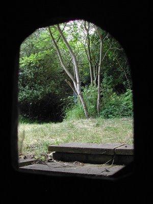 Cat Narnia