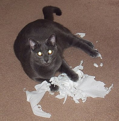 Cat versus TP