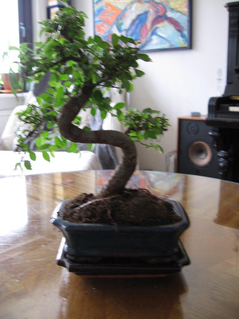 bonsaiträd ikea