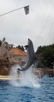 Dolphin High Jump