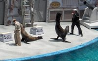 Sea Lion Tail Up