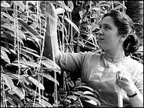 a woman harvesting spaghetti in the BBC program Panorama