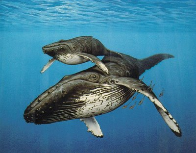 Image result for humpback whale