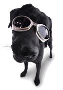 doggle dog