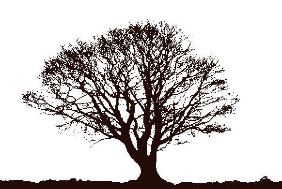 lunar brogue sumo stencil acid tree