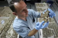 Bosnian worker, anthropologist's assistant, Salih Hodzic handles bones to match to a skeleton from the remains of some 21 persons who's bones lay on the table, at the Lukavac center 80 kms north of Sarajevo, Bosnia, on Friday, July 7, 2006. Some 500 bodies were exhumed from mass-grave sites in Eastern Bosnia and were identified by DNA method, and will be buried during mass burial at Memorial center Potocari near Srebrenica next Tuesday, which will mark the 11th anniversary of Srebrenica massacre. (AP Photo/Amel Emric)