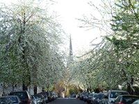 Kensington blossoms