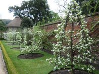 Some of the beautifully trained 250 varieties of fruit trees