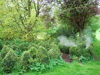 Beware of the topiary dragon