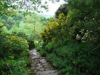 Garden vista to the Malvern Hills