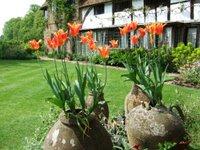 Tulips at Vann