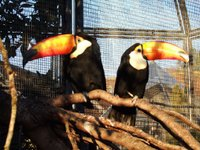 Toucan look either way