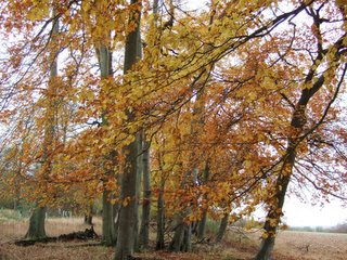Autumn colours Dec 05