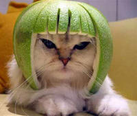 Look Out for Lime Cat!