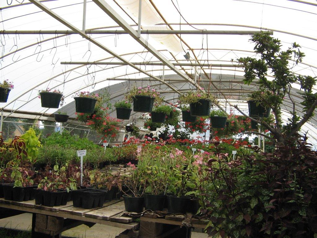 Invernadero evergreen vivero y jardineria for Plantas para invernadero