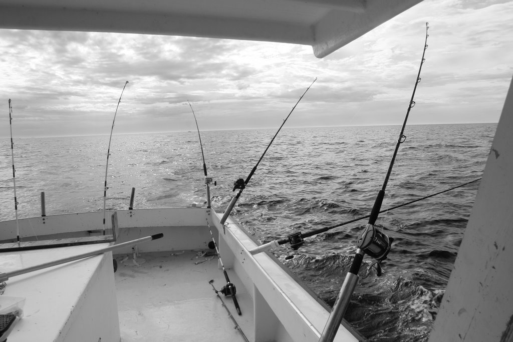 Bramble 39 s guide to fine living some pictures from the for Striper fishing chesapeake bay