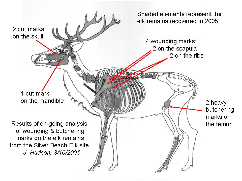 elk organ diagram