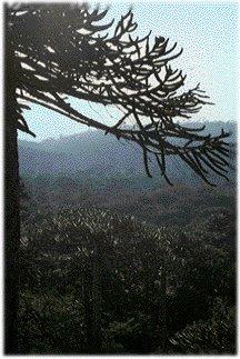 ¡¡¡¡¡En el Bosque Prohibido hay una ENTWIFE!!!!