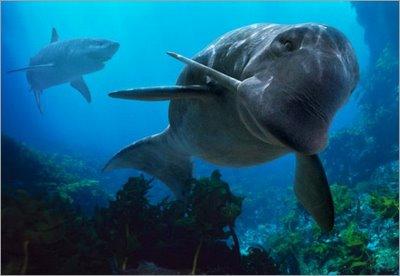 delfín odobenocetops y tiburón megalodon