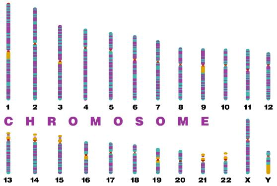 term paper on human genome project