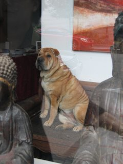 Doggie inside a TriBeCa shop