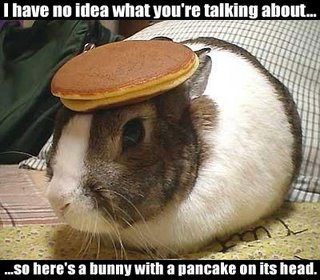 A bunny with a pancake on its head