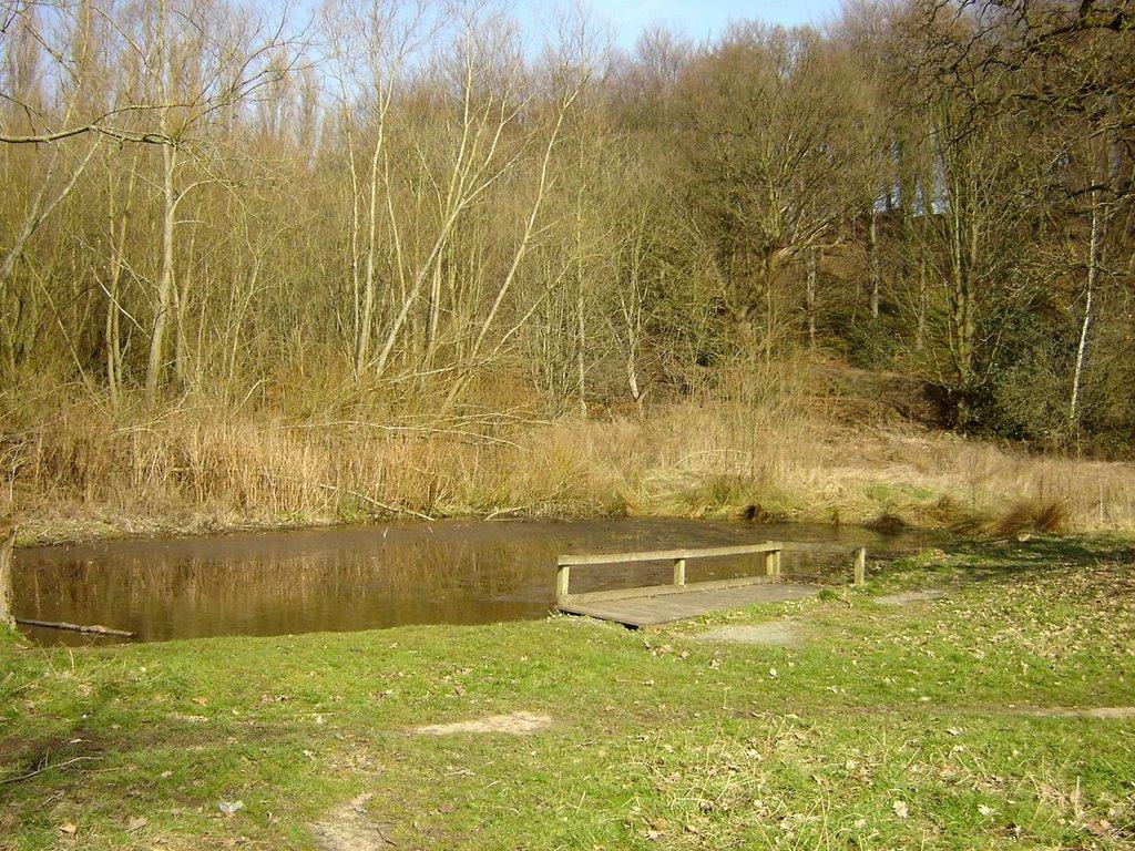 Erddig the secret pond erddig - Build pond wildlife haven ...