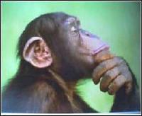 pondering primate