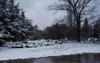 first snow in park