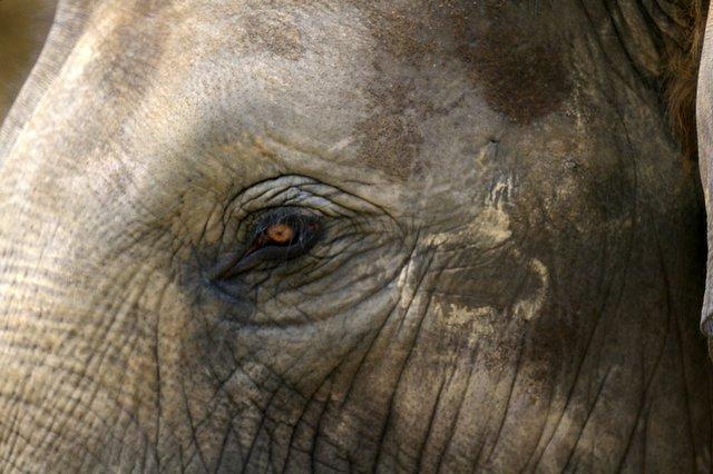 アジアゾウの画像 p1_35