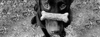 (c) Purina Dog Food