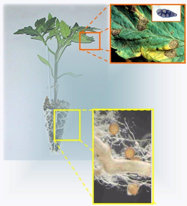 Propuestas de Investigación.: HG. Genómica funcional de plantas.