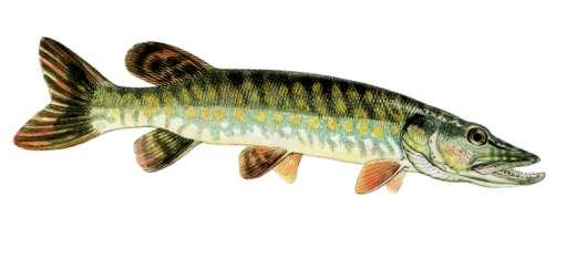 Akhtouba la pêche avril 2016 vidéos